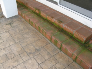 paver-cleaning-before